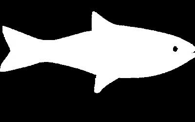 fish_wit